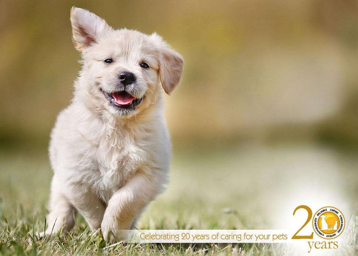 promo-puppy20